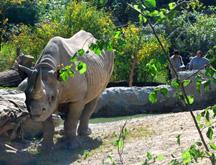 zurich zoo swiss pass